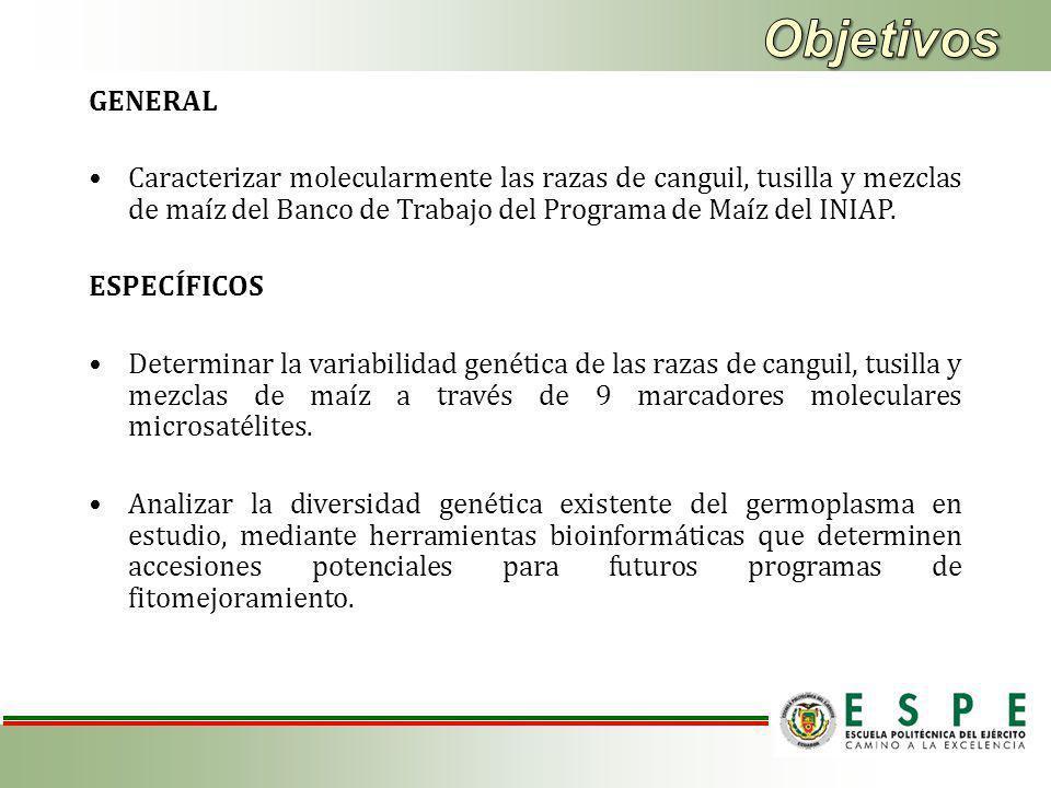 GENERAL Caracterizar molecularmente las razas de canguil, tusilla y mezclas de maíz del Banco de Trabajo del Programa de Maíz del INIAP.