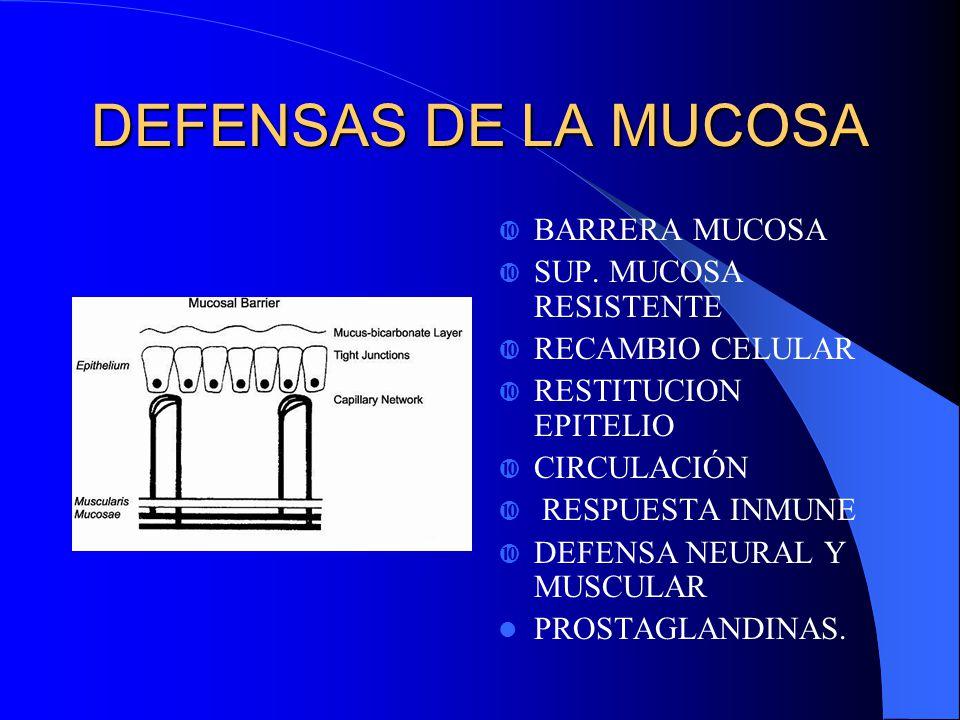 DEFENSAS DE LA MUCOSA BARRERA MUCOSA SUP. MUCOSA RESISTENTE RECAMBIO CELULAR RESTITUCION EPITELIO CIRCULACIÓN RESPUESTA INMUNE DEFENSA NEURAL Y MUSCUL