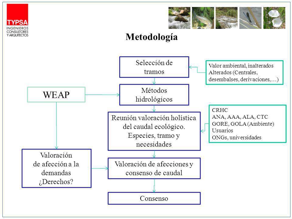 Metodología Métodos hidrológicos Selección de tramos Valoración de afección a la demandas ¿Derechos? Reunión valoración holística del caudal ecológico