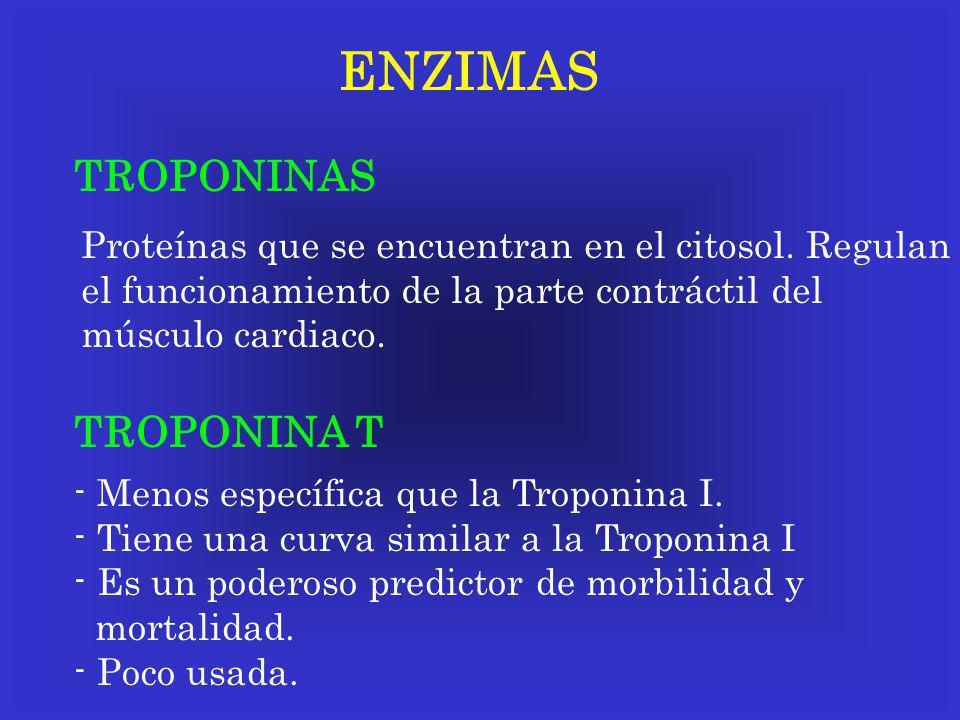 ENZIMAS TROPONINAS Proteínas que se encuentran en el citosol. Regulan el funcionamiento de la parte contráctil del músculo cardiaco. TROPONINA T - Men