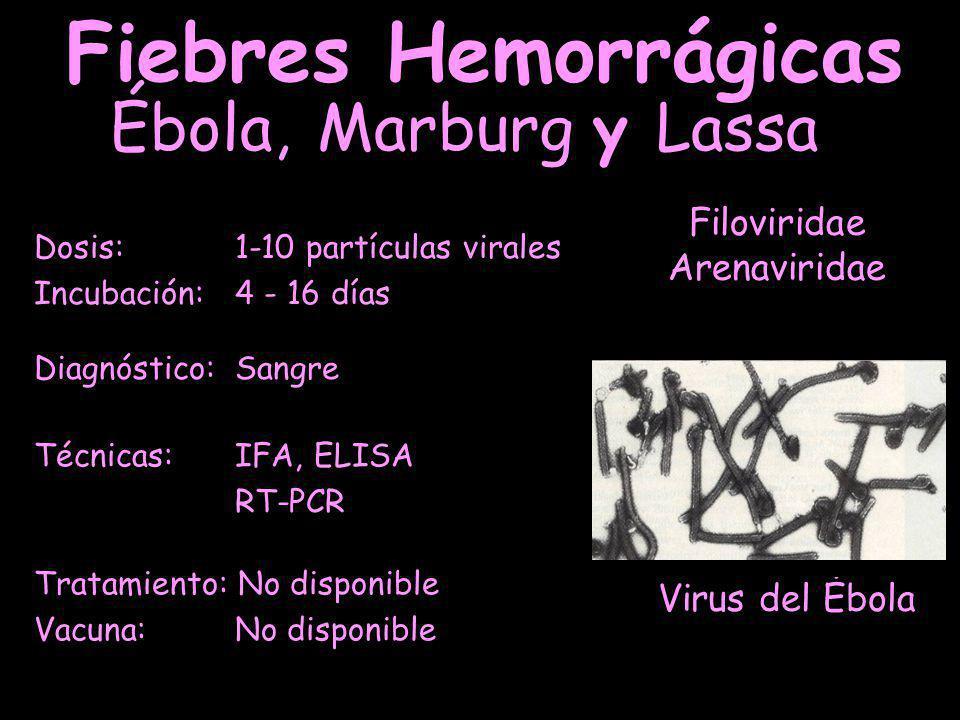 Virus del Ébola Fiebres Hemorrágicas Dosis: 1-10 partículas virales Incubación: 4 - 16 días Ébola, Marburg y Lassa Filoviridae Arenaviridae Tratamiento: No disponible Vacuna: No disponible Técnicas: IFA, ELISA RT-PCR Diagnóstico: Sangre