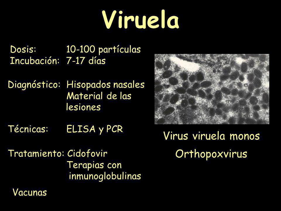 Viruela Virus viruela monos Orthopoxvirus Dosis:10-100 partículas Incubación:7-17 días Vacunas Tratamiento: Cidofovir Terapias con inmunoglobulinas Té