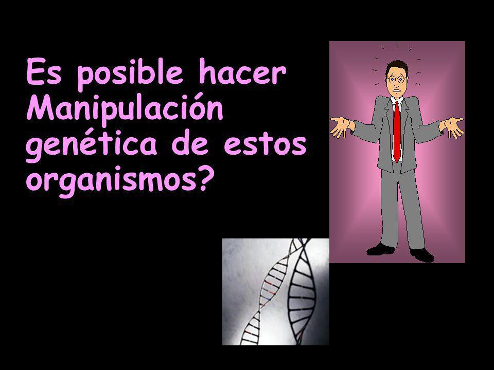 Es posible hacer Manipulación genética de estos organismos?