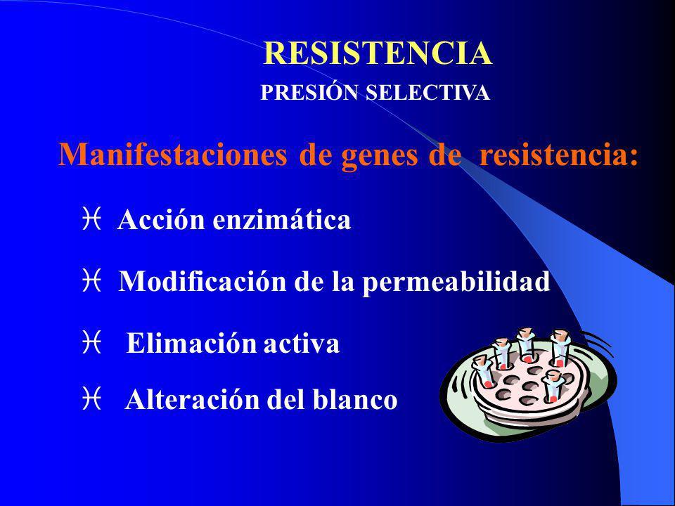 RESISTENCIA PRESIÓN SELECTIVA Manifestaciones de genes de resistencia: i Acción enzimática i Modificación de la permeabilidad i Elimación activa i Alt