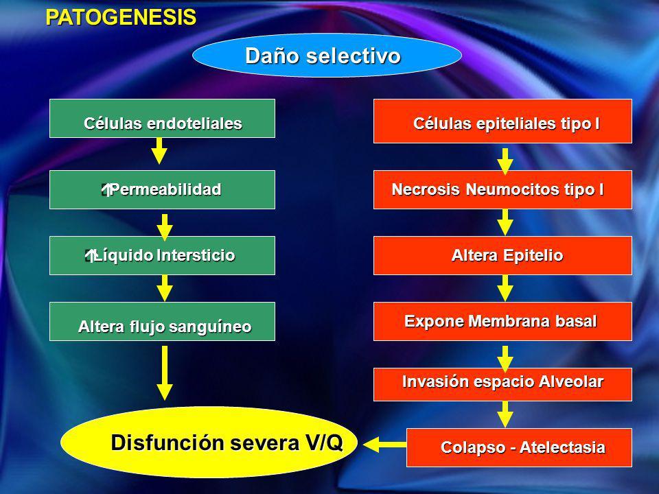 PATOGENESIS Células epiteliales tipo I Necrosis Neumocitos tipo I Altera Epitelio Expone Membrana basal Invasión espacio Alveolar Colapso - Atelectasi