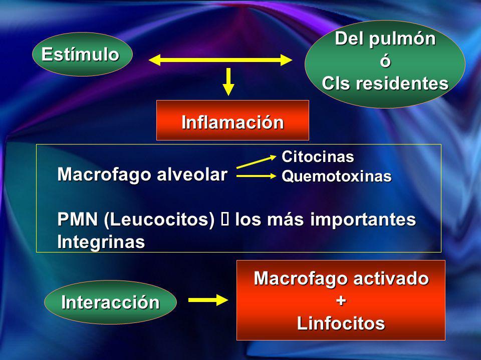 Estímulo Del pulmón ó Cls residentes Inflamación Macrofago alveolar PMN (Leucocitos) los más importantes Integrinas CitocinasQuemotoxinas Interacción