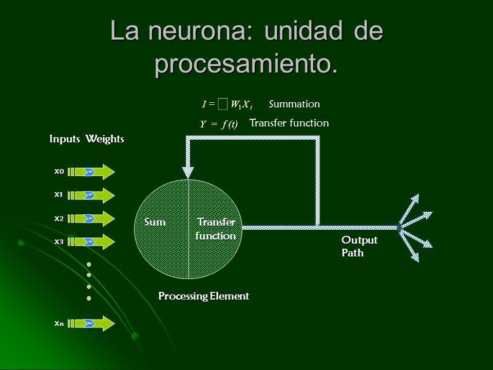 La neurona: unidad de procesamiento. W 0 W 0 X0 W 1 W 1 X1 W 2 W 2 X2 W 3 W 3 X3 W N W N Xn Inputs Weights Processing Element Output Path Sum Transfer