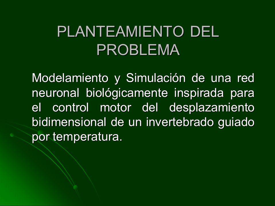 PLANTEAMIENTO DEL PROBLEMA Modelamiento y Simulación de una red neuronal biológicamente inspirada para el control motor del desplazamiento bidimension