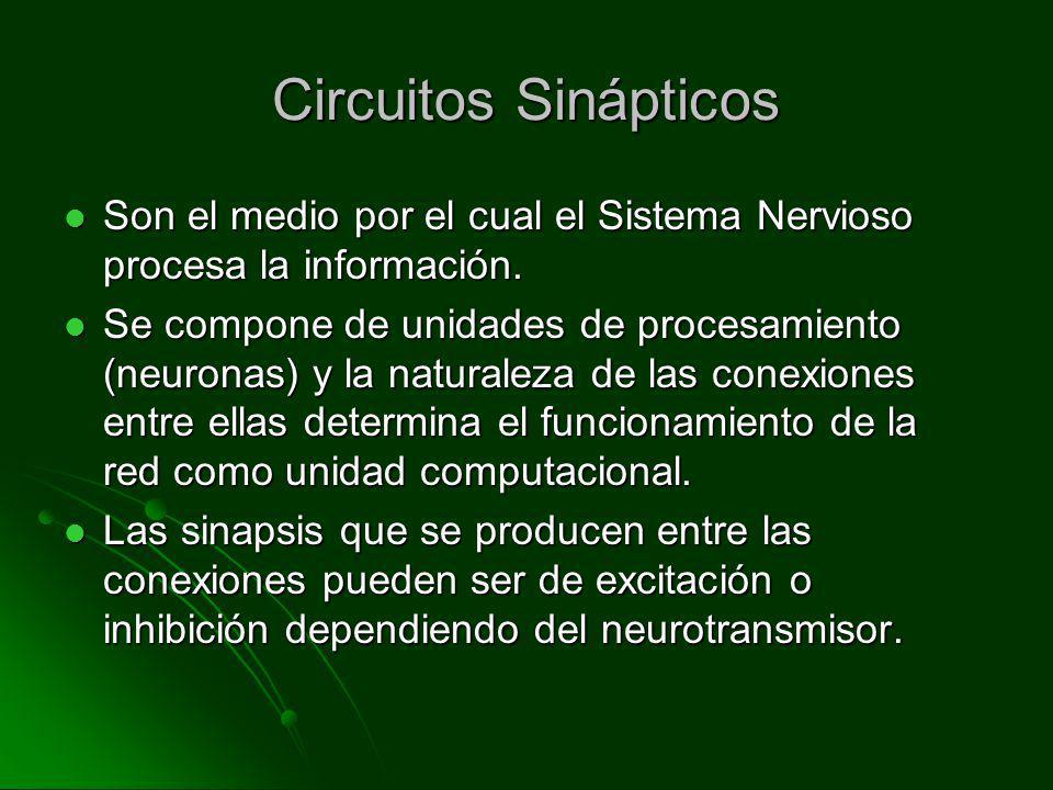 Circuitos Sinápticos Son el medio por el cual el Sistema Nervioso procesa la información. Son el medio por el cual el Sistema Nervioso procesa la info