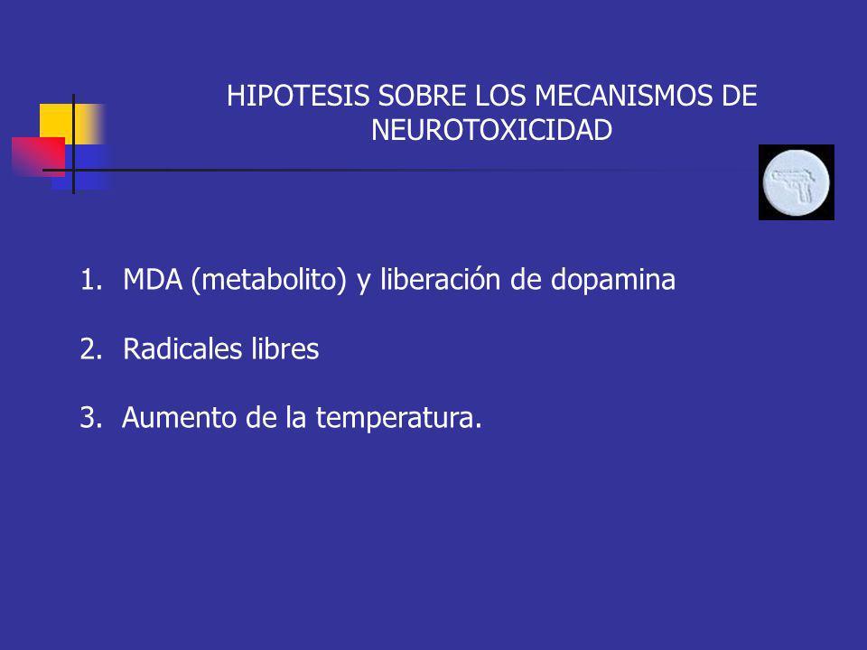 HIPOTESIS SOBRE LOS MECANISMOS DE NEUROTOXICIDAD 1.MDA (metabolito) y liberación de dopamina 2.Radicales libres 3. Aumento de la temperatura.