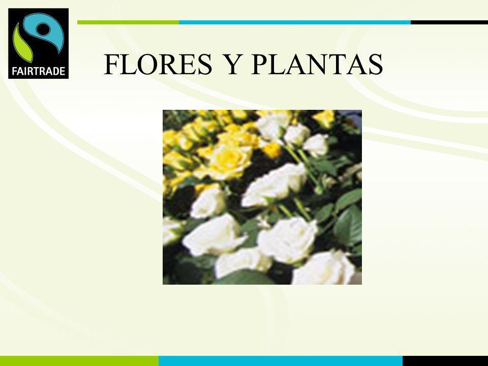 FLO International FLORES Y PLANTAS