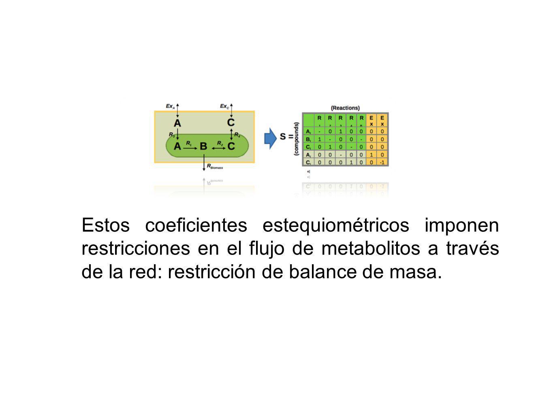 Estos coeficientes estequiométricos imponen restricciones en el flujo de metabolitos a través de la red: restricción de balance de masa.