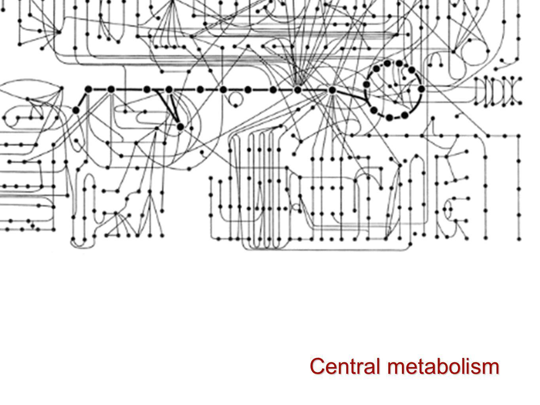 Central metabolism