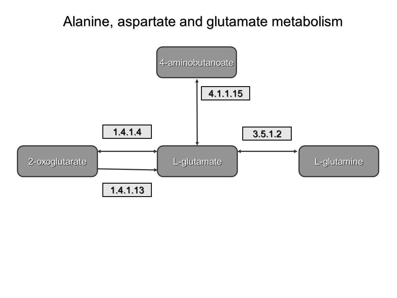 2-oxoglutarateL-glutamineL-glutamate 4-aminobutanoate 1.4.1.4 4.1.1.15 3.5.1.2 1.4.1.13 Alanine, aspartate and glutamate metabolism