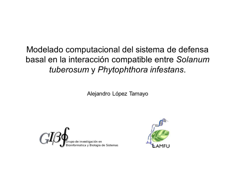 Modelado computacional del sistema de defensa basal en la interacción compatible entre Solanum tuberosum y Phytophthora infestans.