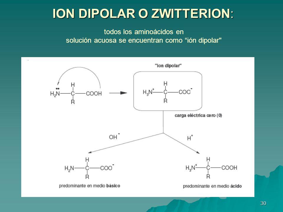 30 ION DIPOLAR O ZWITTERION: todos los aminoácidos en solución acuosa se encuentran como ión dipolar