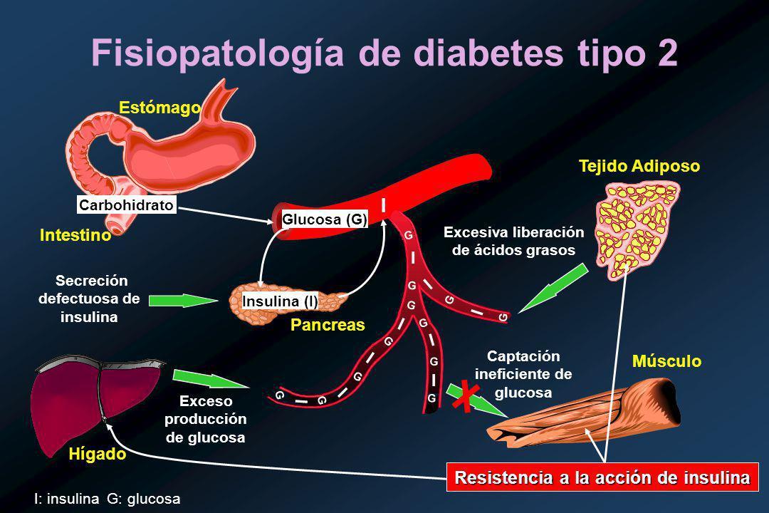 Fisiopatología de diabetes tipo 2 Glucosa (G) Carbohidrato Insulina (I) I I I I I I I I G G G G G G G G I G G G Secreción defectuosa de insulina Exceso producción de glucosa Excesiva liberación de ácidos grasos Resistencia a la acción de insulina Tejido Adiposo Hígado Pancreas Músculo Captación ineficiente de glucosa Estómago Intestino I: insulina G: glucosa I G