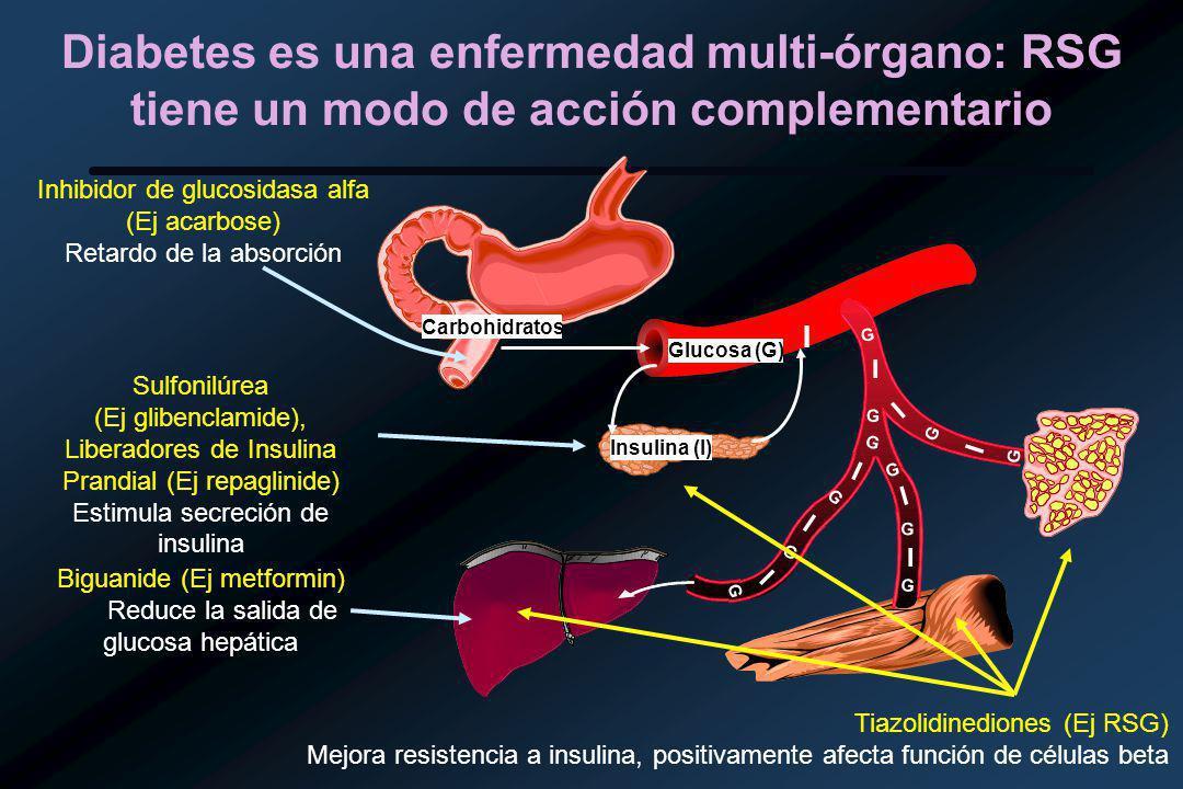 Diabetes es una enfermedad multi-órgano: RSG tiene un modo de acción complementario Glucosa (G) Insulina (I) I Inhibidor de glucosidasa alfa (Ej acarbose) Retardo de la absorción Sulfonilúrea (Ej glibenclamide), Liberadores de Insulina Prandial (Ej repaglinide) Estimula secreción de insulina Biguanide (Ej metformin) Reduce la salida de glucosa hepática I I I I I I I G G G G G G G G I G G G Carbohidratos Tiazolidinediones (Ej RSG) Mejora resistencia a insulina, positivamente afecta función de células beta