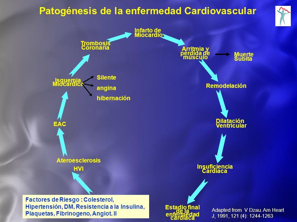 Factores de Riesgo : Colesterol, Hipertensión, DM, Resistencia a la Insulina, Plaquetas, Fibrinogeno, Angiot. II Ateroesclerosis HVI EAC Trombosis Cor