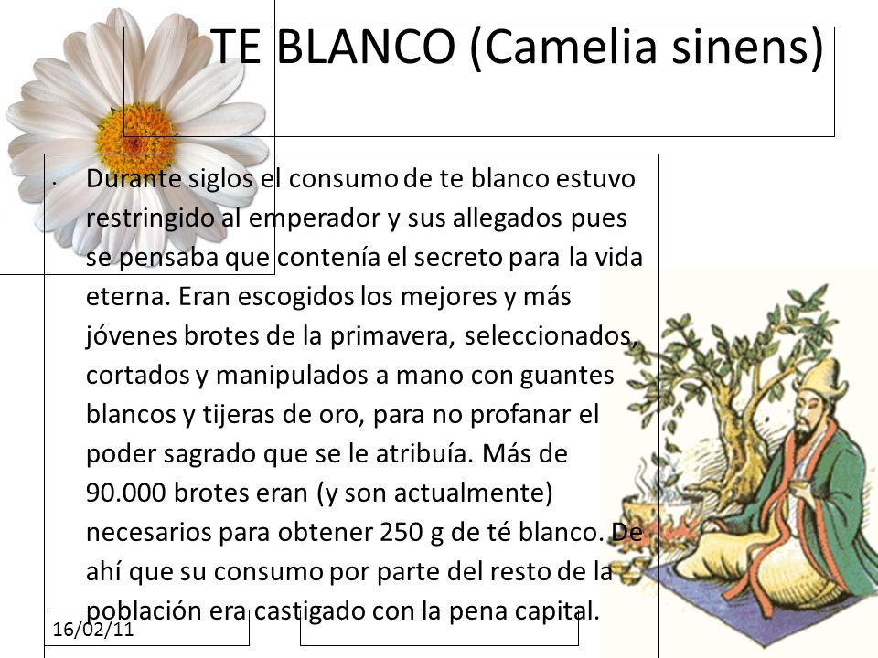 16/02/11 TE BLANCO (Camelia sinens) Durante siglos el consumo de te blanco estuvo restringido al emperador y sus allegados pues se pensaba que contení