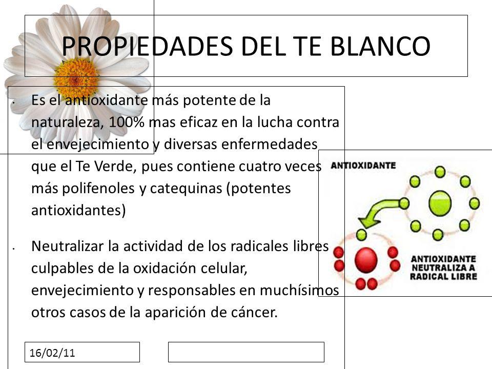 16/02/11 PROPIEDADES DEL TE BLANCO Es el antioxidante más potente de la naturaleza, 100% mas eficaz en la lucha contra el envejecimiento y diversas en