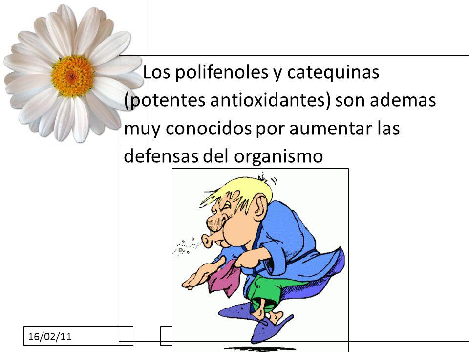 16/02/11 Los polifenoles y catequinas (potentes antioxidantes) son ademas muy conocidos por aumentar las defensas del organismo