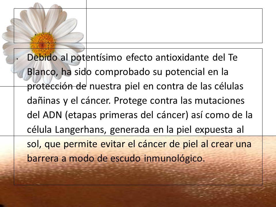 16/02/11 Debido al potentísimo efecto antioxidante del Te Blanco, ha sido comprobado su potencial en la protección de nuestra piel en contra de las cé