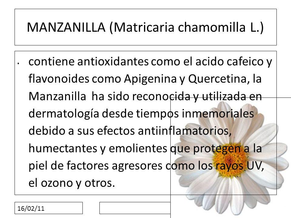 16/02/11 MANZANILLA (Matricaria chamomilla L.) contiene antioxidantes como el acido cafeico y flavonoides como Apigenina y Quercetina, la Manzanilla h