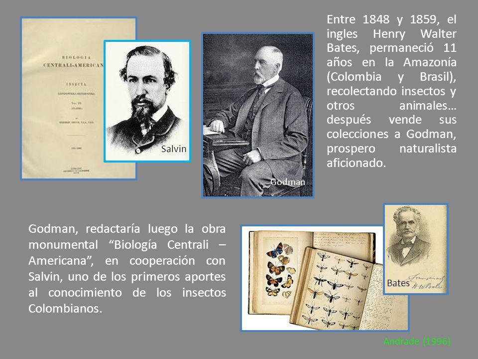 Entre 1848 y 1859, el ingles Henry Walter Bates, permaneció 11 años en la Amazonía (Colombia y Brasil), recolectando insectos y otros animales… despué
