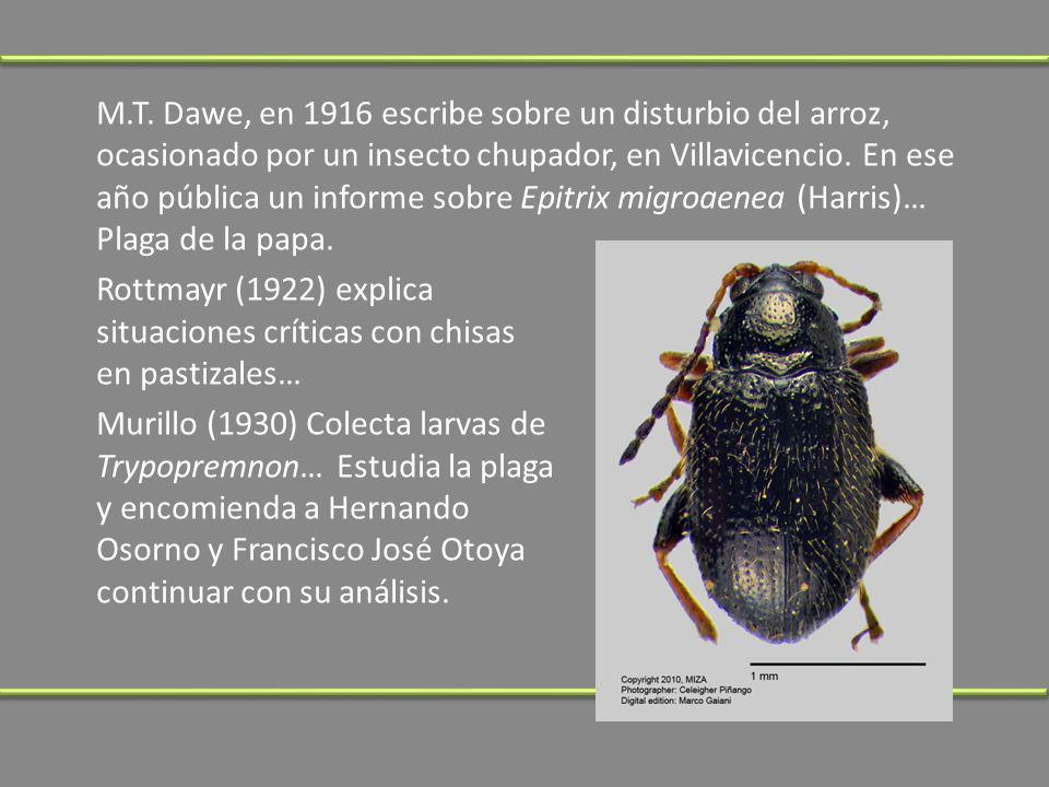 M.T. Dawe, en 1916 escribe sobre un disturbio del arroz, ocasionado por un insecto chupador, en Villavicencio. En ese año pública un informe sobre Epi