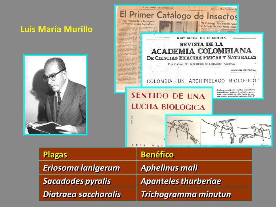 Luis María Murillo PlagasBenéfico Eriosoma lanigerumAphelinus mali Sacadodes pyralisApanteles thurberiae Diatraea saccharalisTrichogramma minutun Plag