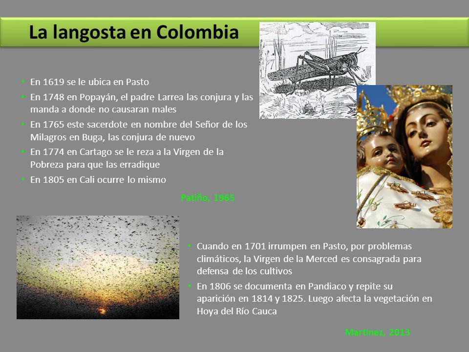 La langosta en Colombia En 1619 se le ubica en Pasto En 1748 en Popayán, el padre Larrea las conjura y las manda a donde no causaran males En 1765 est