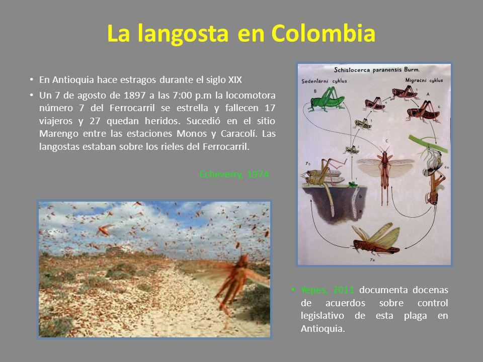 La langosta en Colombia En Antioquia hace estragos durante el siglo XIX Un 7 de agosto de 1897 a las 7:00 p.m la locomotora número 7 del Ferrocarril s