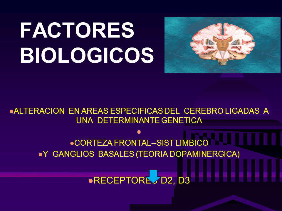 FACTORES BIOLOGICOS ALTERACION EN AREAS ESPECIFICAS DEL CEREBRO LIGADAS A UNA DETERMINANTE GENETICA CORTEZA FRONTAL--SIST LIMBICO Y GANGLIOS BASALES (