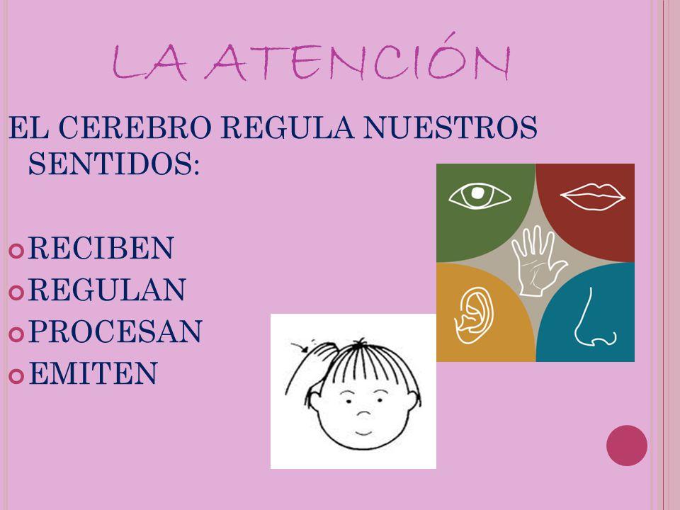 LA ATENCIÓN EL CEREBRO REGULA NUESTROS SENTIDOS: RECIBEN REGULAN PROCESAN EMITEN