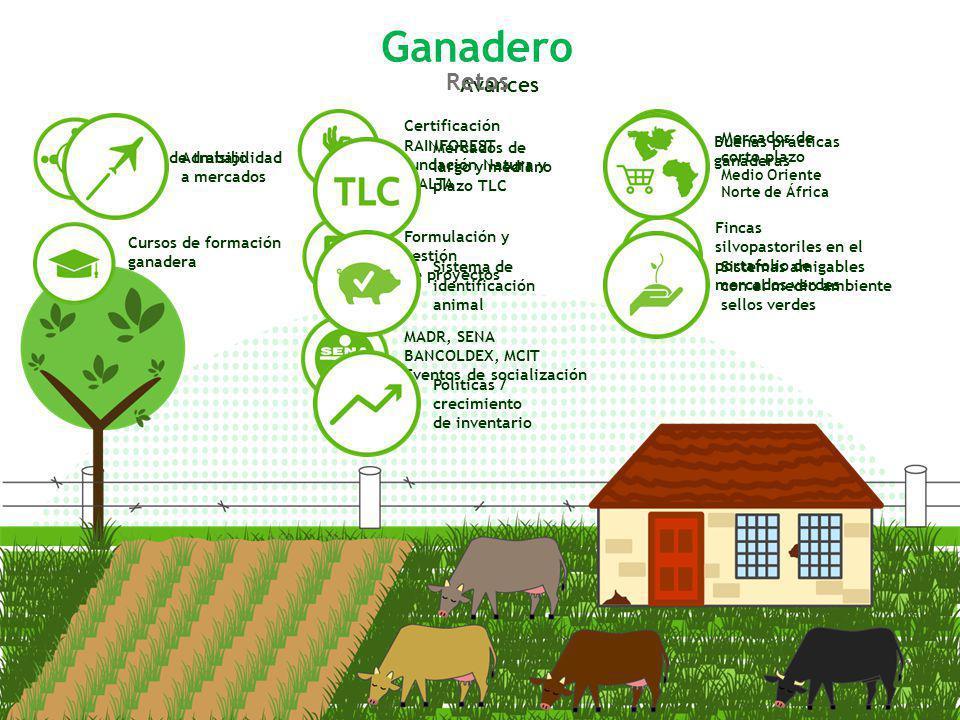 Cursos de formación ganadera Mesa de trabajo Avances Certificación RAINFOREST fundación Natura y CIALTA Formulación y gestión de proyectos MADR, SENA