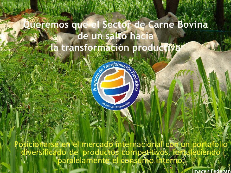 Queremos que el Sector de Carne Bovina de un salto hacia la transformación productiva Posicionarse en el mercado internacional con un portafolio diver