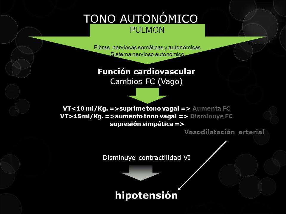 TONO AUTONÓMICO PULMON. Fibras nerviosas somáticas y autonómicas Sistema nervioso autonómico Función cardiovascular Cambios FC (Vago) VT suprime tono