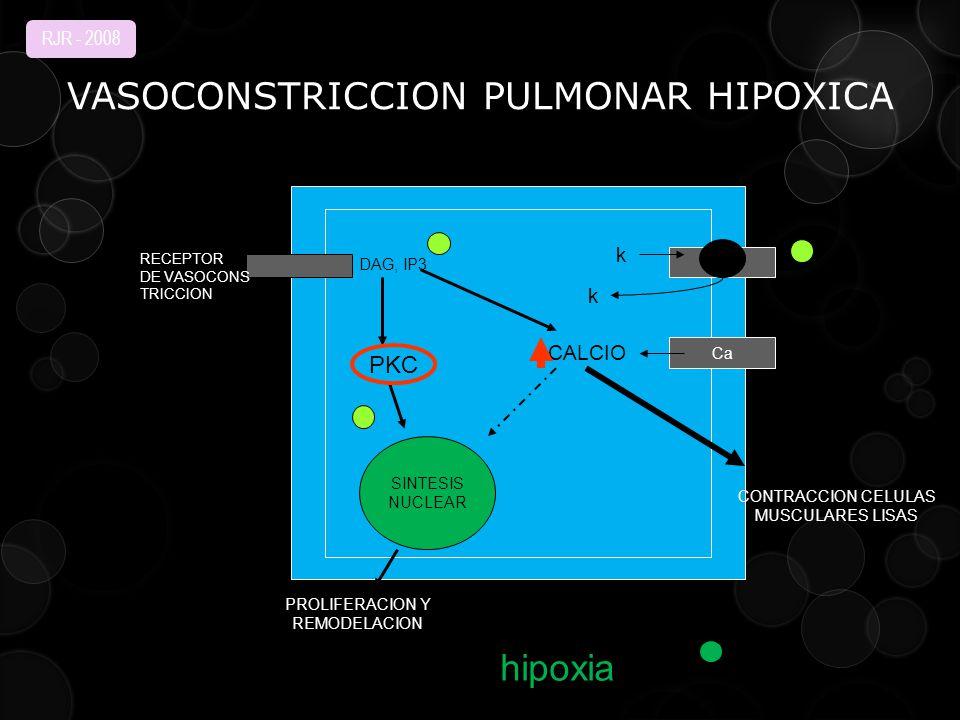 VASOCONSTRICCION PULMONAR HIPOXICA Ca SINTESIS NUCLEAR PKC DAG, IP3 CALCIO RECEPTOR DE VASOCONS TRICCION k k CONTRACCION CELULAS MUSCULARES LISAS PROLIFERACION Y REMODELACION hipoxia INTERACCION CORAZON PULMON RJR - 2008
