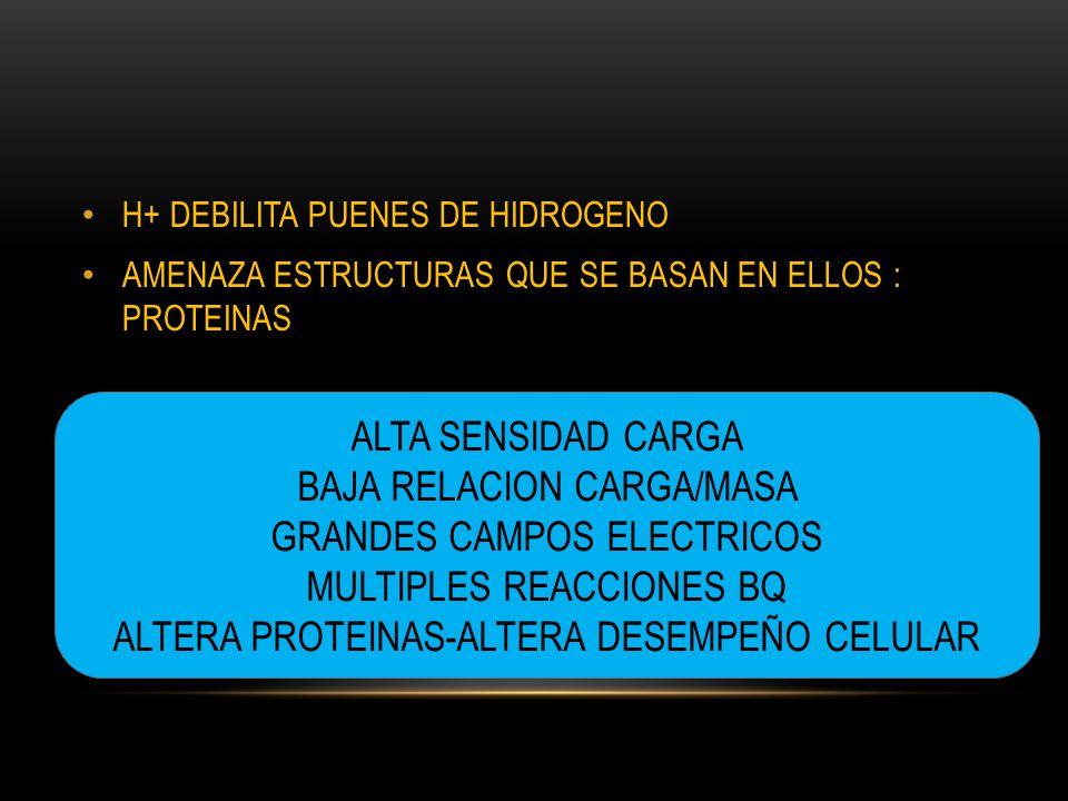 H+ DEBILITA PUENES DE HIDROGENO AMENAZA ESTRUCTURAS QUE SE BASAN EN ELLOS : PROTEINAS ALTA SENSIDAD CARGA BAJA RELACION CARGA/MASA GRANDES CAMPOS ELECTRICOS MULTIPLES REACCIONES BQ ALTERA PROTEINAS-ALTERA DESEMPEÑO CELULAR
