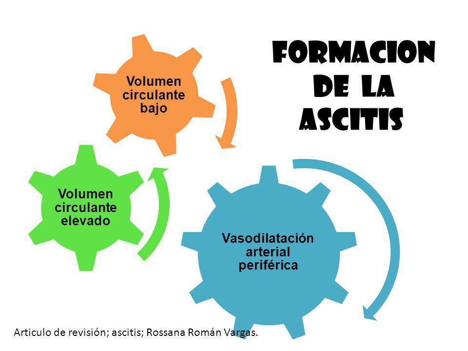 Vasodilatación arterial periférica Volumen circulante elevado Volumen circulante bajo FORMACION DE LA ASCITIS Articulo de revisión; ascitis; Rossana R