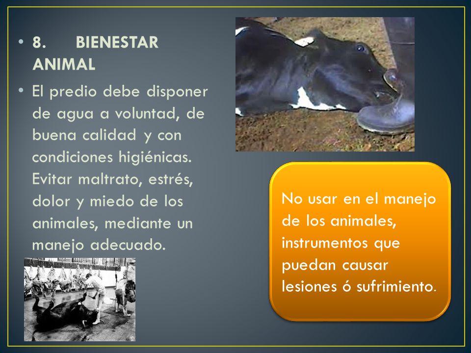8. BIENESTAR ANIMAL El predio debe disponer de agua a voluntad, de buena calidad y con condiciones higiénicas. Evitar maltrato, estrés, dolor y miedo