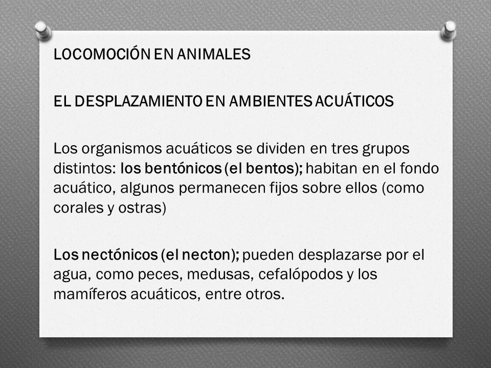 LOCOMOCIÓN EN ANIMALES EL DESPLAZAMIENTO EN AMBIENTES ACUÁTICOS Los organismos acuáticos se dividen en tres grupos distintos: los bentónicos (el bento