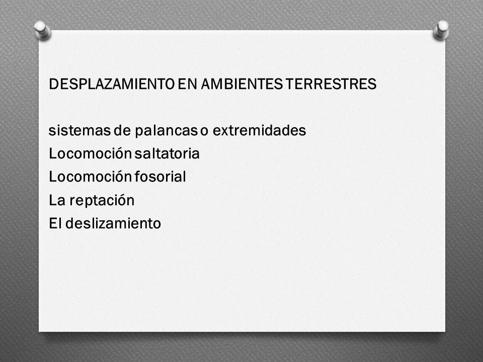 DESPLAZAMIENTO EN AMBIENTES TERRESTRES sistemas de palancas o extremidades Locomoción saltatoria Locomoción fosorial La reptación El deslizamiento