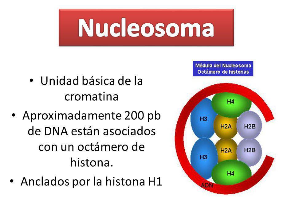 Unidad básica de la cromatina Aproximadamente 200 pb de DNA están asociados con un octámero de histona. Anclados por la histona H1