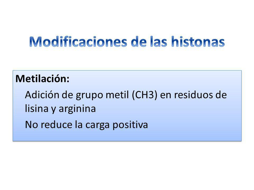 Metilación: Adición de grupo metil (CH3) en residuos de lisina y arginina No reduce la carga positiva Metilación: Adición de grupo metil (CH3) en resi