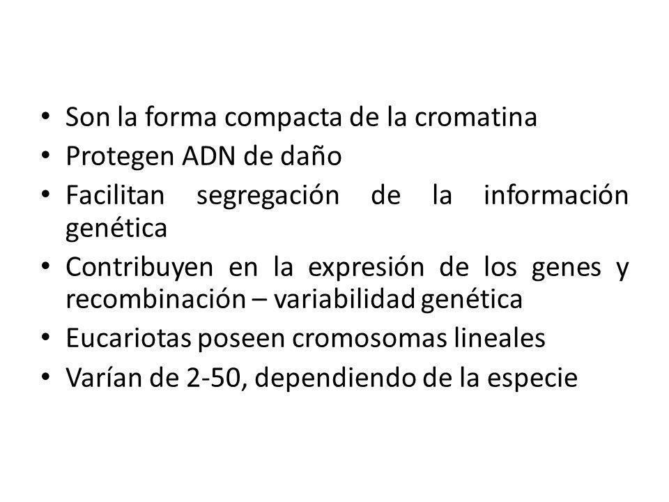 Son la forma compacta de la cromatina Protegen ADN de daño Facilitan segregación de la información genética Contribuyen en la expresión de los genes y