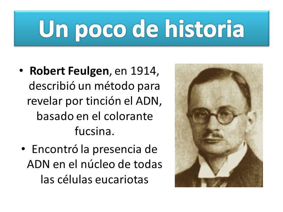 Robert Feulgen, en 1914, describió un método para revelar por tinción el ADN, basado en el colorante fucsina. Encontró la presencia de ADN en el núcle