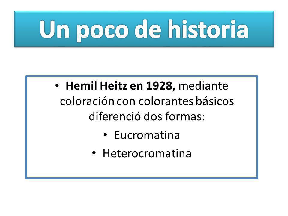 Hemil Heitz en 1928, mediante coloración con colorantes básicos diferenció dos formas: Eucromatina Heterocromatina