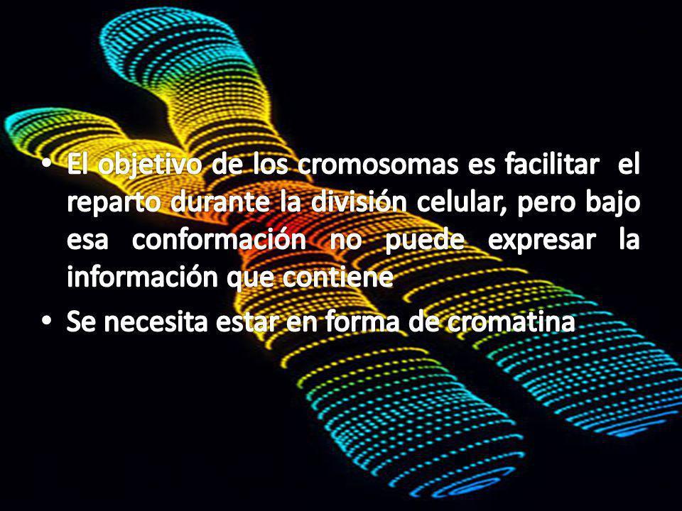 Son la forma compacta de la cromatina Protegen ADN de daño Facilitan segregación de la información genética Contribuyen en la expresión de los genes y recombinación – variabilidad genética Eucariotas poseen cromosomas lineales Varían de 2-50, dependiendo de la especie
